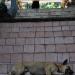 abenteuerreise thailand - hunde10