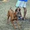 abenteuerreise thailand - hunde5