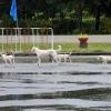 abenteuerreise thailand - hunde8