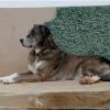Reisen mit Hund, Mit Hund auf Reisen, Fernreisen mit Hund, Fliegen mit Hund